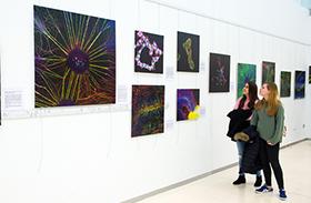 Una exposición en el Círculo de Arte de Toledo muestra la belleza del sistema nervioso a través del microscopio